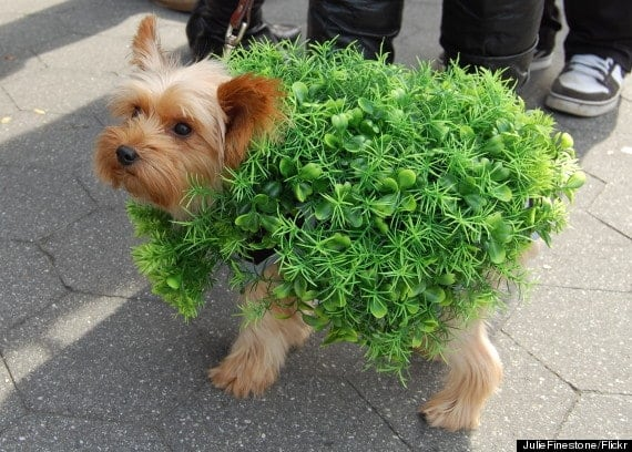 o-dog-chia-pet-570