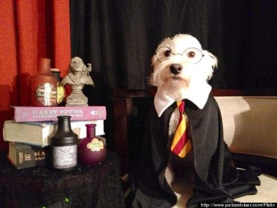 o-harry-potter-dog-570